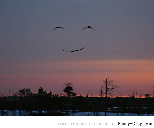 Smile people, the birds are [513]