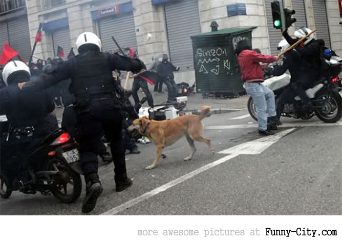 A Dog Protesting [ 13 photos ] [1765]