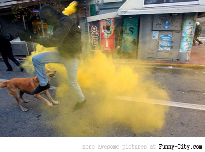 A Dog Protesting [ 13 photos ] [1759]