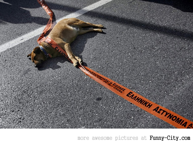 A Dog Protesting [ 13 photos ] [1760]