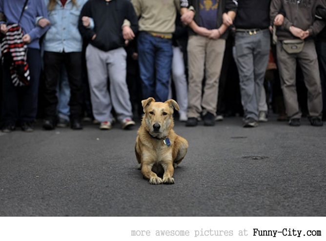 A Dog Protesting [ 13 photos ] [1755]