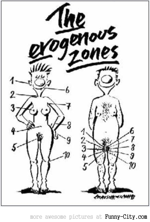 The erogenous zones