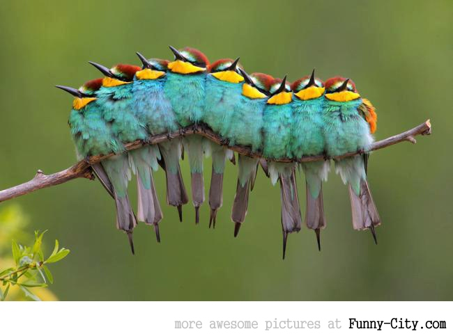 This is not a caterpillar! [3160]