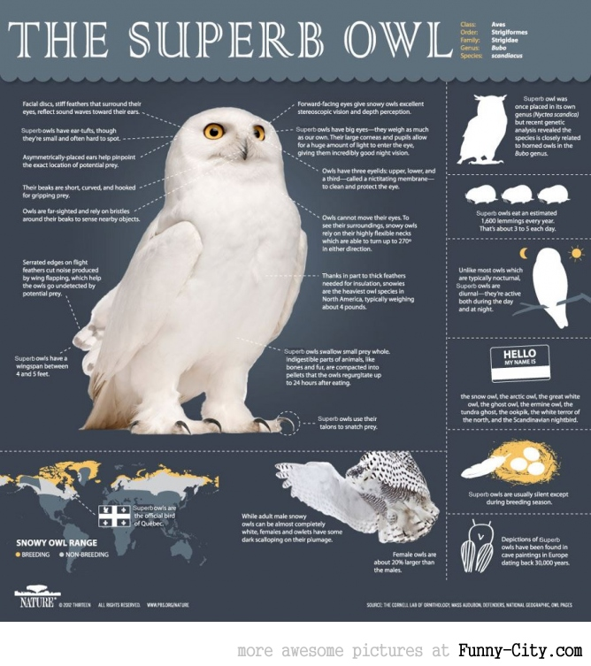 An overview of the SuperbOwl