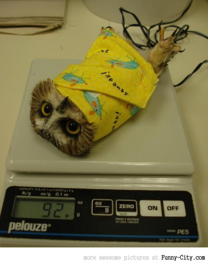 It pleases me to see that this is the proper method to weigh an owl.