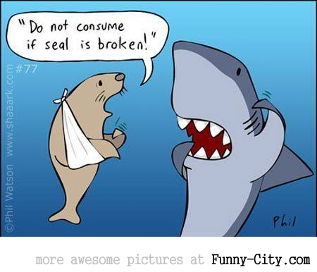 Shark in Trouble