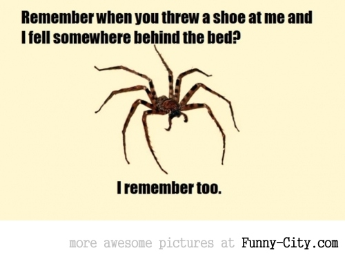 Girlfriend said she missed killing a spider when she threw a shoe at it above the couch. I sent her this. [7027]