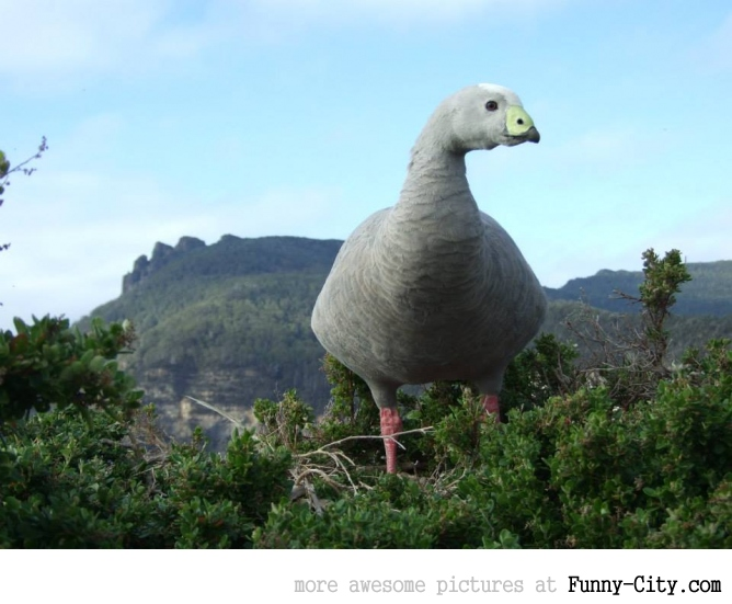 When a goose looks like a dinosaur a 40ft tall dinosaur.