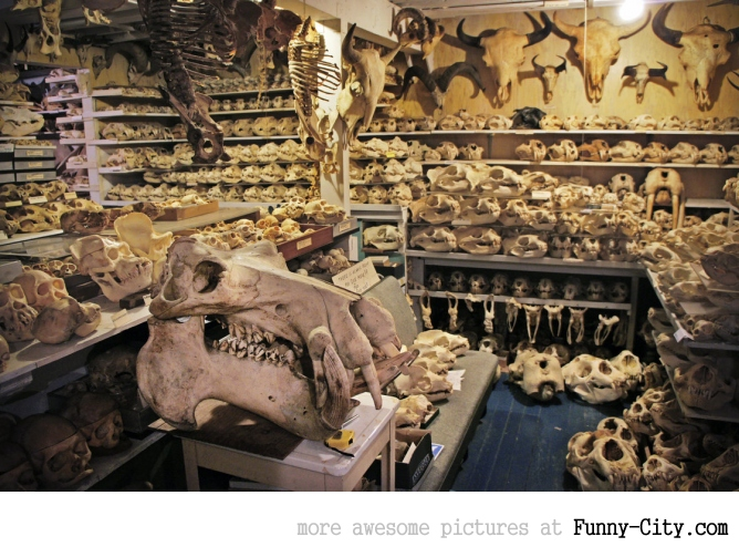 Skull Collector's Basement