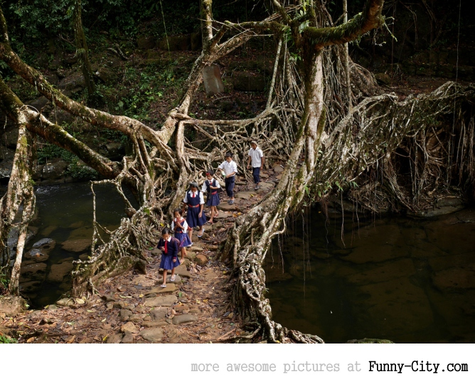 Khasi children cross an awesome bridge from roots