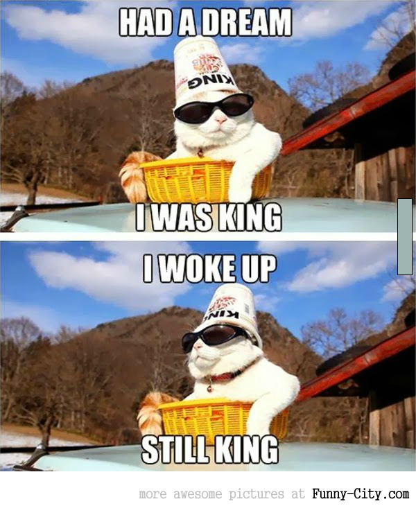 King cat is still king