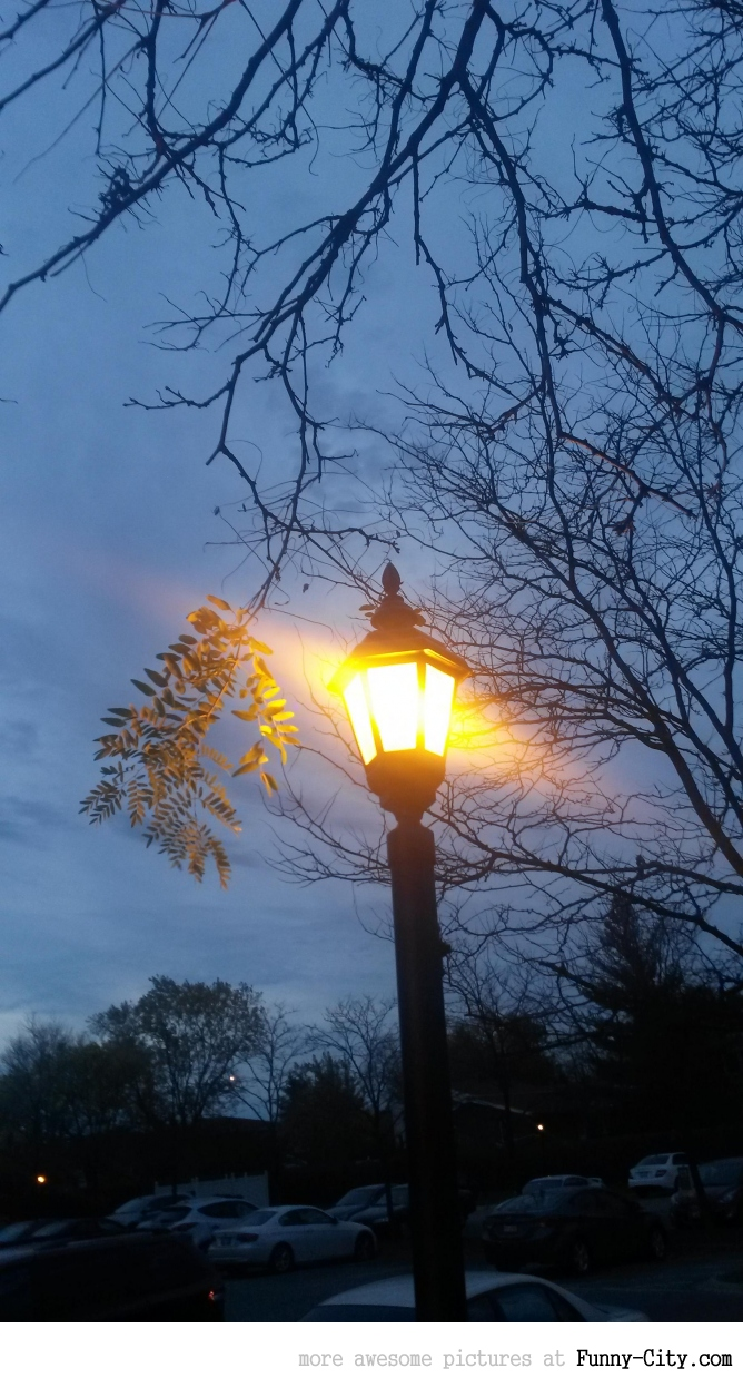 A lamp is keeping this tree branch alive
