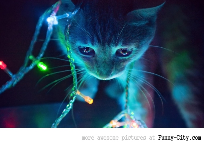 This cat wanted to feel the christmas spirit!