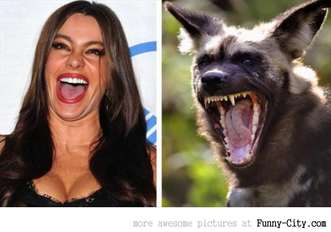 8 celebrities and their animal Doppelganger
