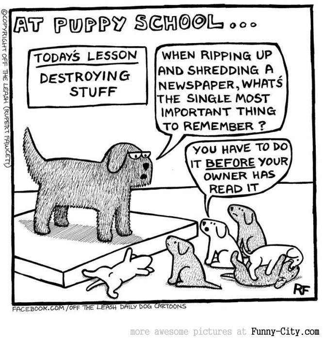 At puppy school