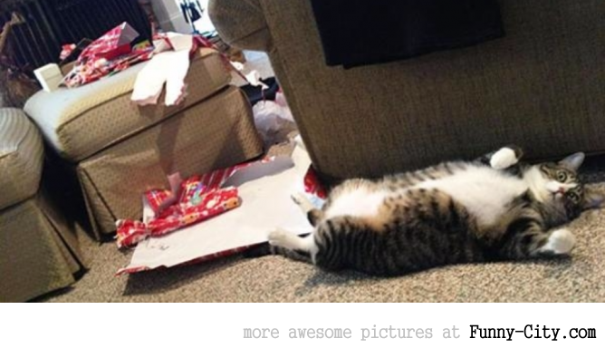 Pets VS Christmas (Part I - 8 photos)