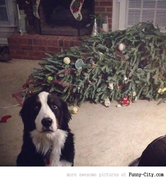 Pets VS Christmas [Part II - 7 photos]