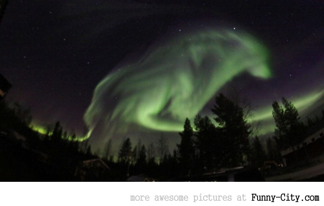 Aurora Borealis in the shape of a wolf