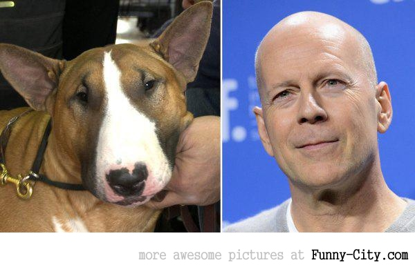 Celebrities and their animal Doppelganger (18 photos) [9271]