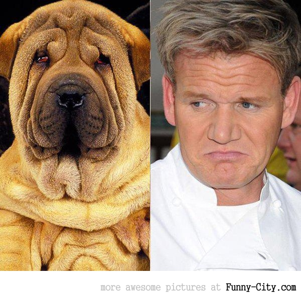 Celebrities and their animal Doppelganger (18 photos) [9277]