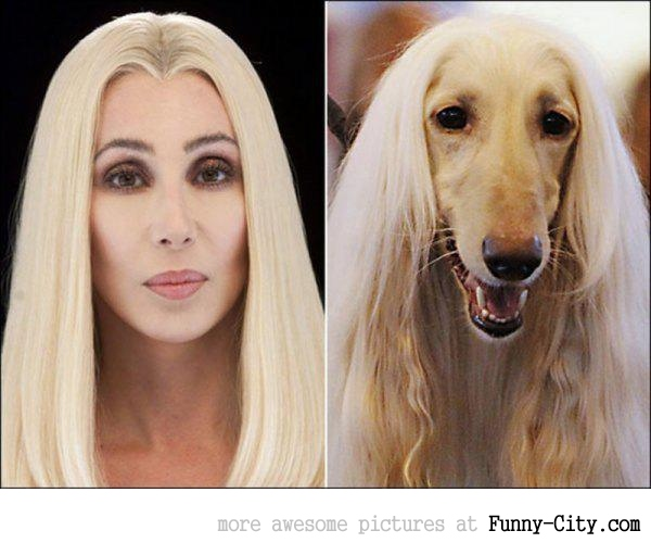Celebrities and their animal Doppelganger (18 photos) [9279]