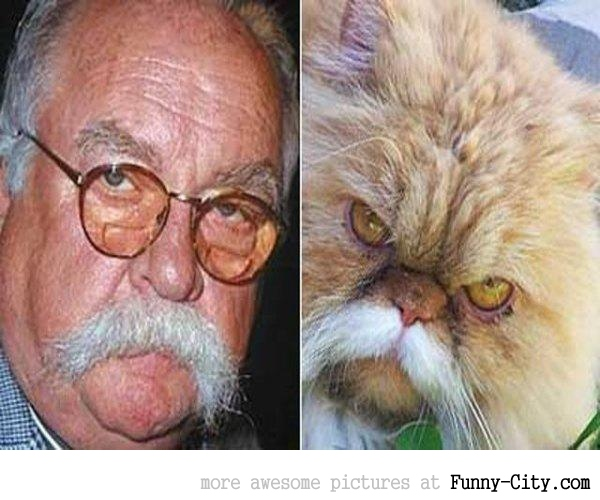 Celebrities and their animal Doppelganger (18 photos) [9281]