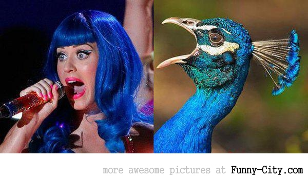 Celebrities and their animal Doppelganger (18 photos) [9293]