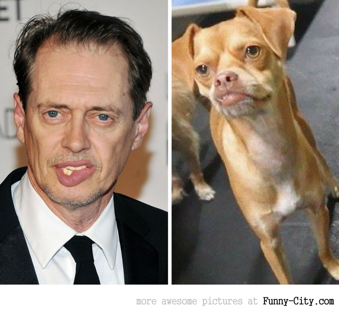 Celebrities and their animal Doppelganger (18 photos) [9571]