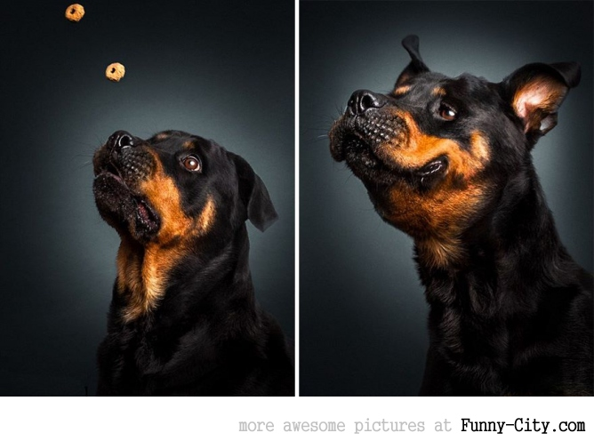 Christian Vieler - Dogs catching treats (13 photos)