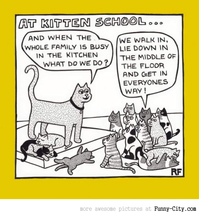 At kitten school