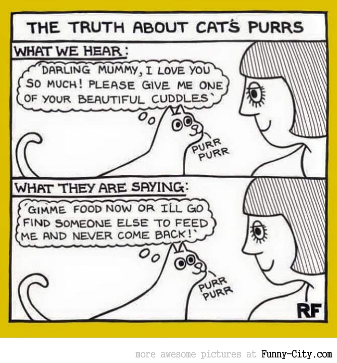The truth about cat's purrs