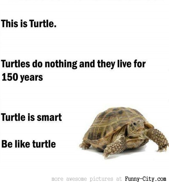 This is a turtle