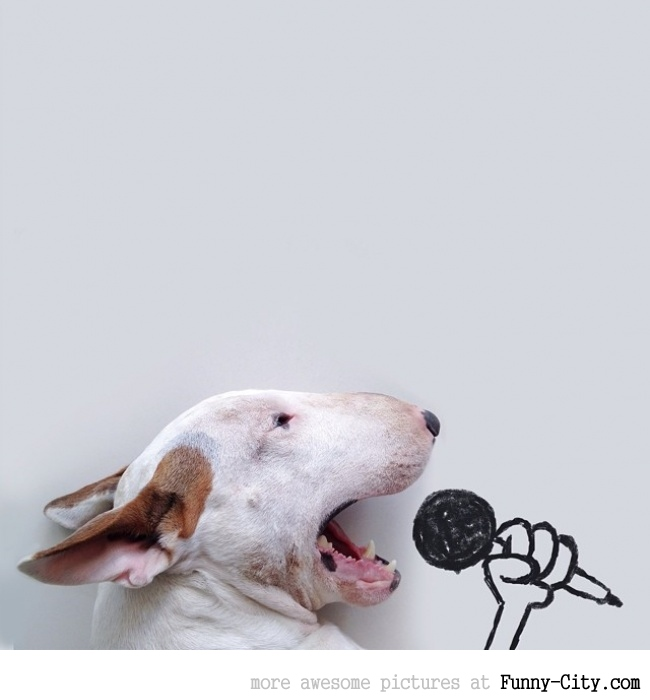 Illustration photography with this adorable bull terrier! (23 photos) [10416]