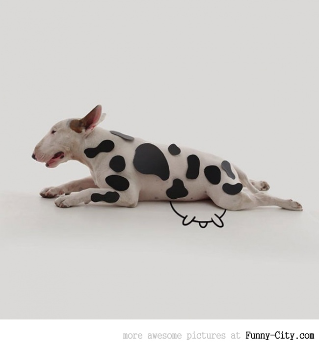 Illustration photography with this adorable bull terrier! (23 photos) [10418]