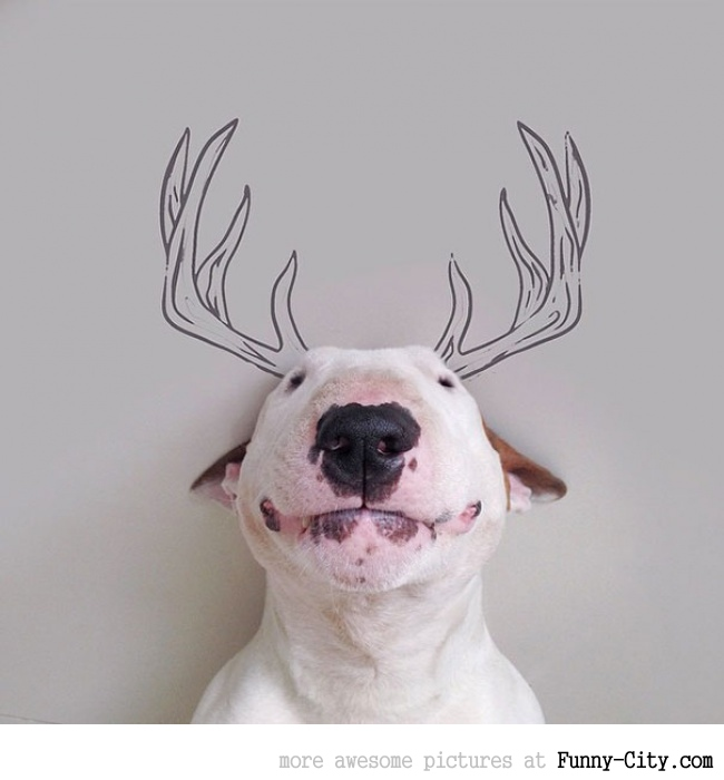 Illustration photography with this adorable bull terrier! (23 photos) [10421]