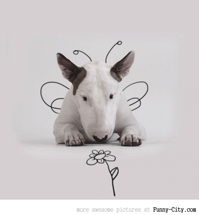 Illustration photography with this adorable bull terrier! (23 photos) [10423]