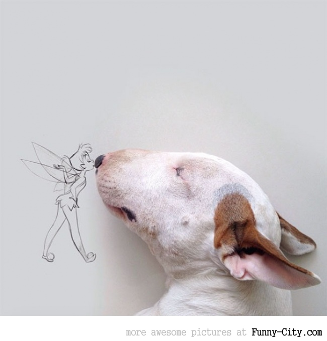 Illustration photography with this adorable bull terrier! (23 photos) [10424]