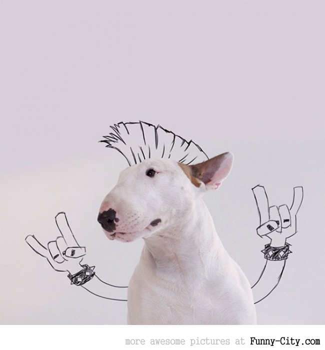 Illustration photography with this adorable bull terrier! (23 photos) [10425]