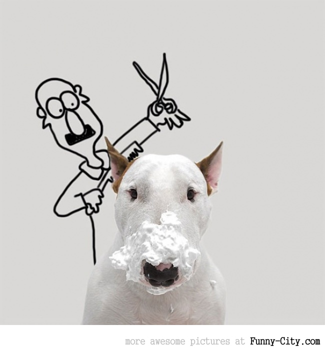 Illustration photography with this adorable bull terrier! (23 photos) [10428]