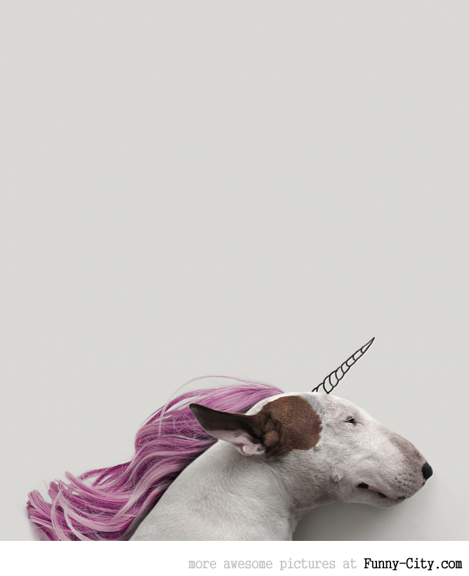 Illustration photography with this adorable bull terrier! (23 photos) [10432]