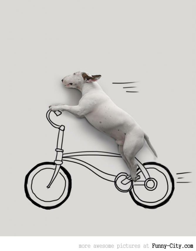 Illustration photography with this adorable bull terrier! (23 photos) [10433]