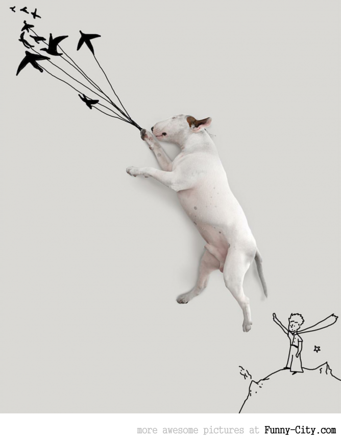 Illustration photography with this adorable bull terrier! (23 photos) [10436]