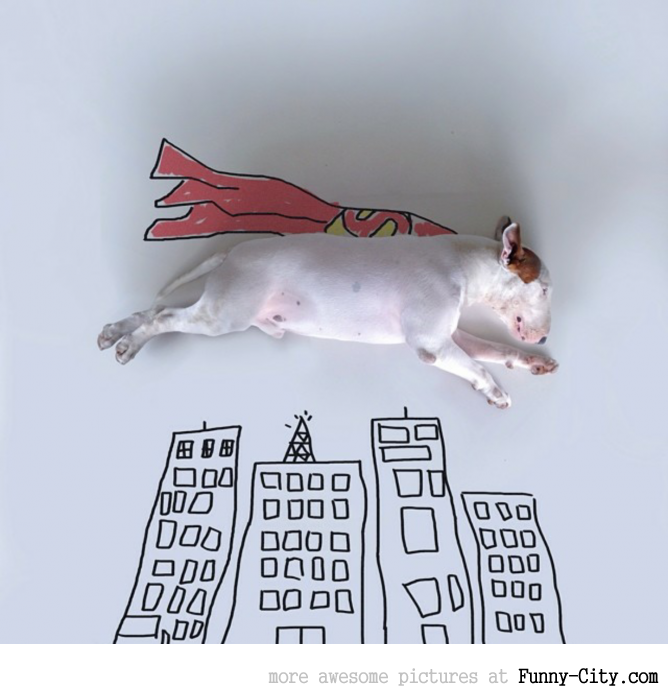 Illustration photography with this adorable bull terrier! (23 photos) [10437]