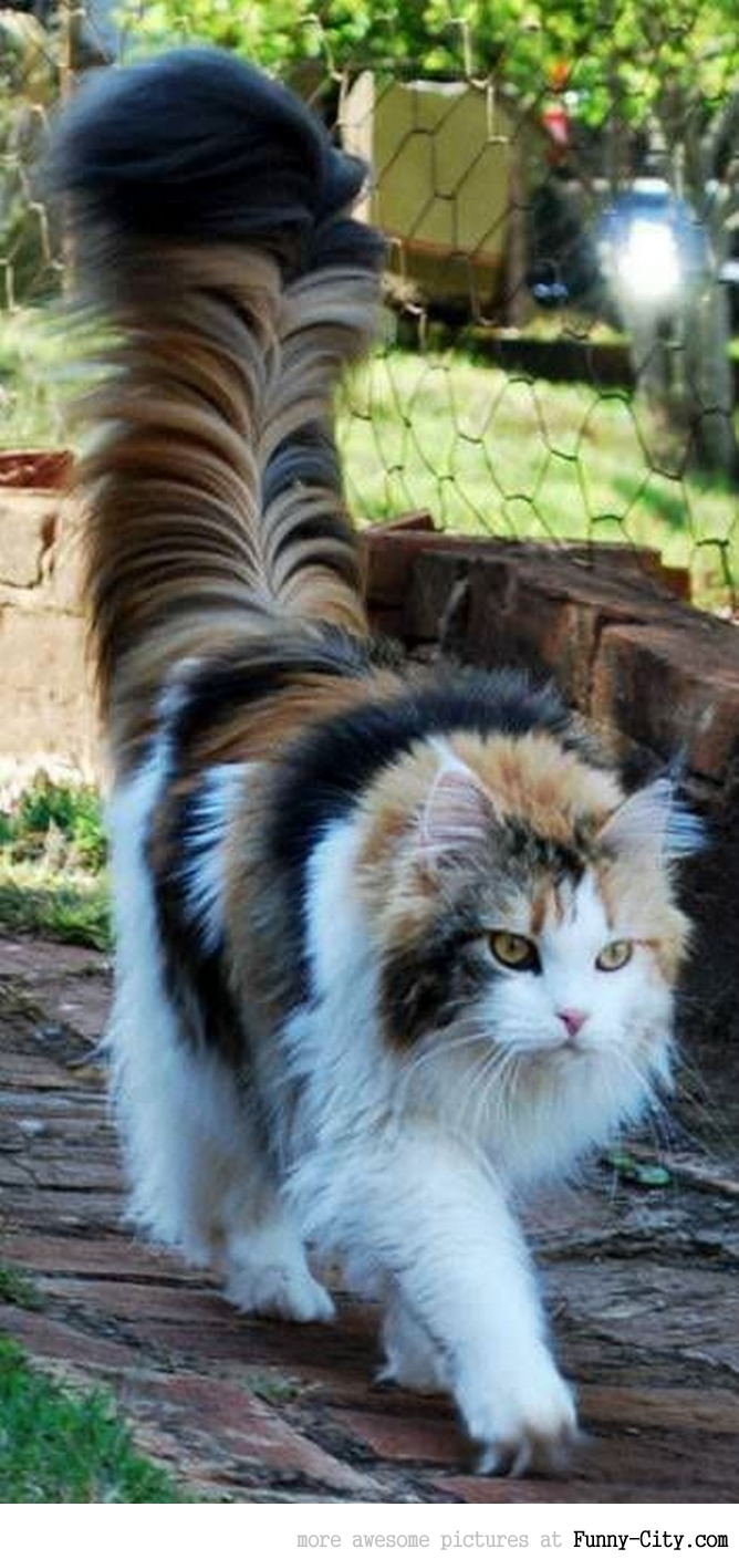 Such a marvelous tail