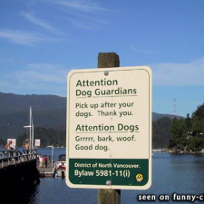 Attention dogs!