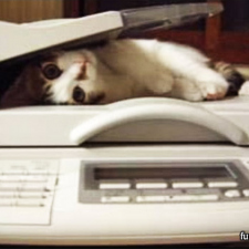 Cat scan failed