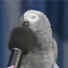 Animal Planet - Einstein the parrot
