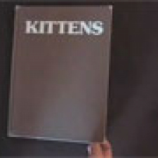Kittens inspired by kittens