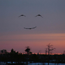 Smile people, the birds are