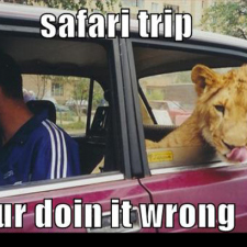 Safari trip the wrong way